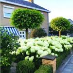 В Голландии – растения везде, где есть хотя бы 20-50 сантиметров земли…