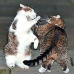 Кошачьи «разборки» на Даунинг-стрит