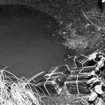 В реке Тисе – «боевые пловцы»